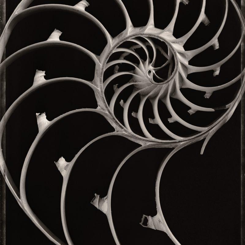 Sliced Nautilus Shell, c. 2000