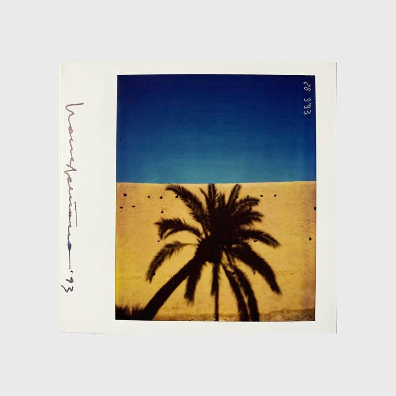 Untitled Polaroid (palm tree)