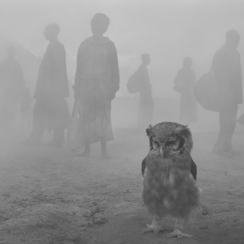 The Day May Break with 'Harriet and People in Fog', 2021