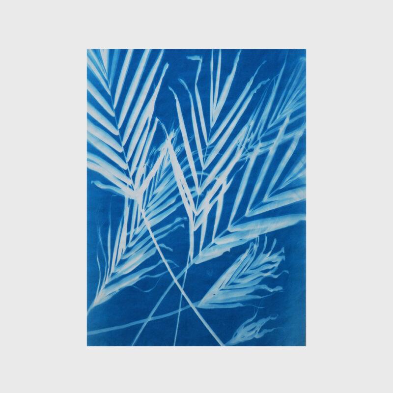 Palms 2-28-19 (2), 2019