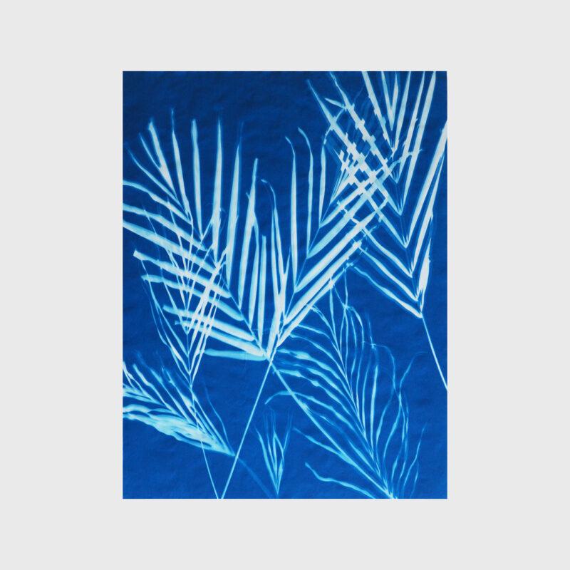 Palms 3-3-19 (1), 2019